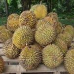 Vista del fruto del durián