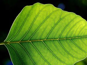 Hoja de una planta verde