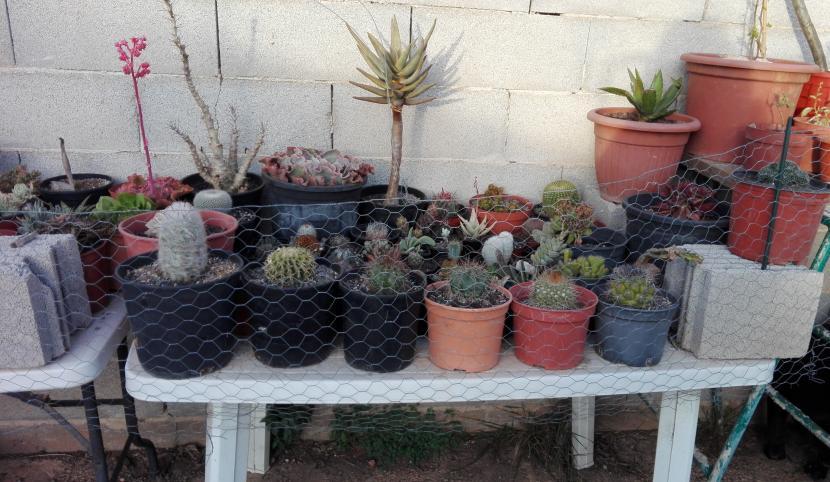 Proteger plantas del viento