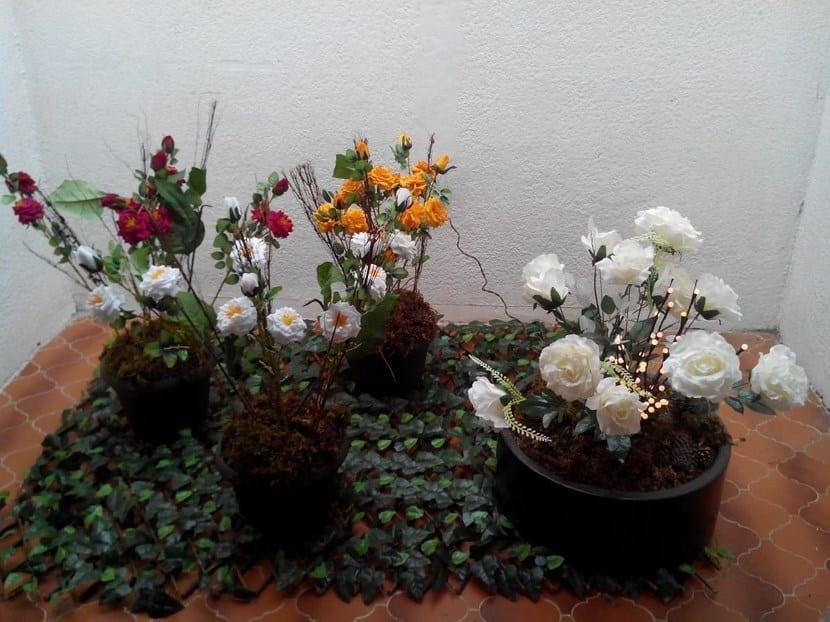 Rosales en macetas