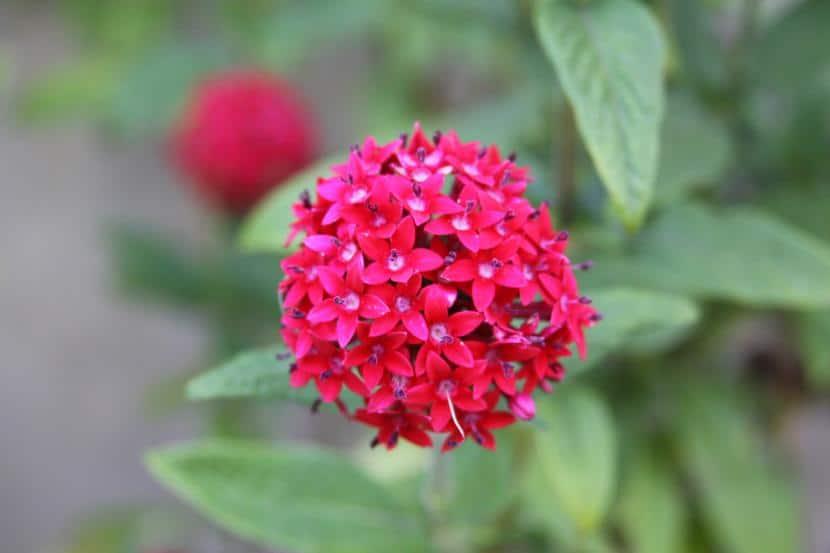 Plantas con flor todo el a o for Plantas exterior todo el ano