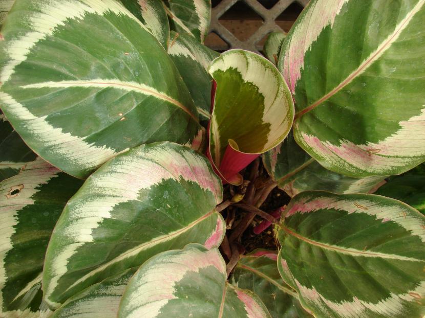 Reverdece tu hogar con estas preciosas plantas de interior sin flor
