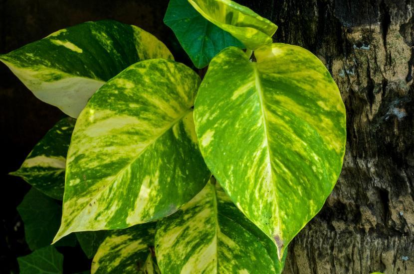 6 plantas de interior que necesitan poca luz - Plantas de interior que no necesitan luz ...