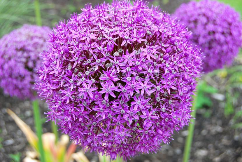 Flores Decorativas Malva