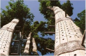 Aquilaria, árbol más caro del mundo