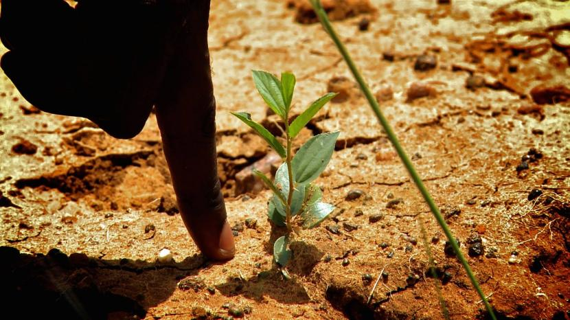Árbol crece gracias a Ecosia