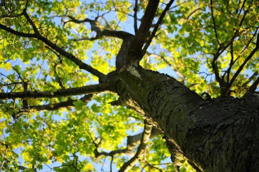 rboles de hoja caduca ideales para tener rincones de sombra