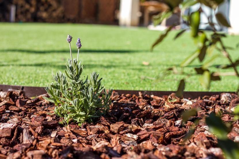 Corteza de pino en el jardín