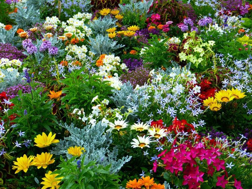 Flores de jardín
