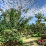 Jardín con palmeras