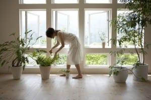 Limpieza de plantas