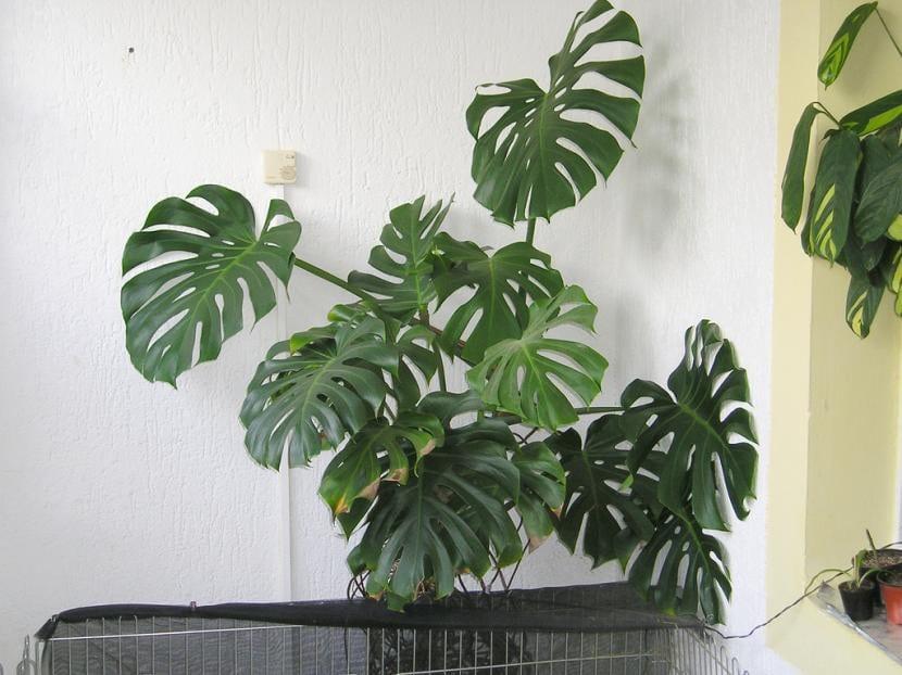 6 plantas de interior que necesitan poca luz