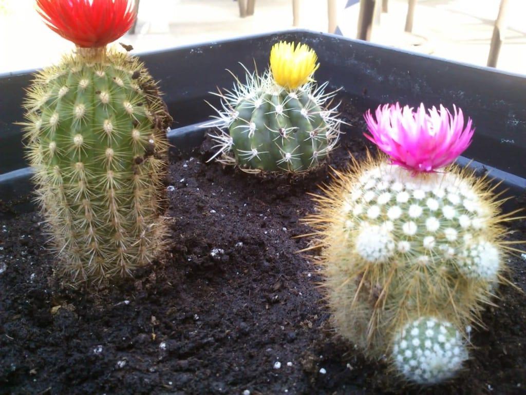 Cactus con flores artificiales