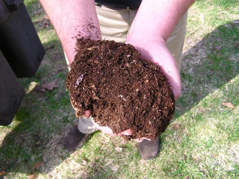 Compost, un abono ideal para tu planta