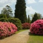 Jardín con arbustos