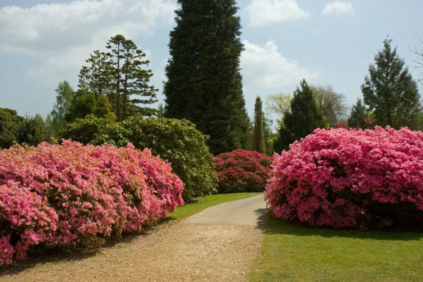 Qu es un arbusto y qu tipos hay for Arbustos para jardin