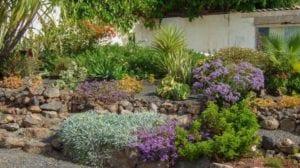 Jardín sin mantenimiento