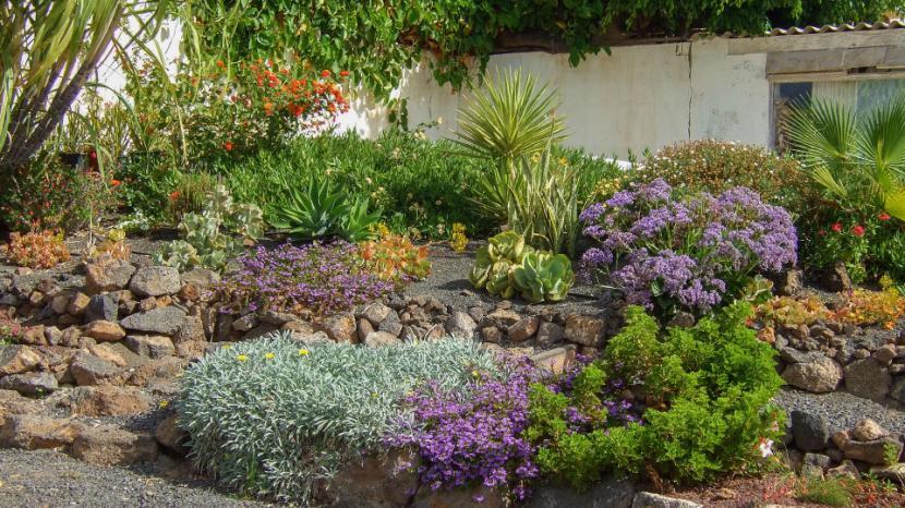 C mo tener un jard n sin mantenimiento for Diseno de jardines pequenos sin cesped