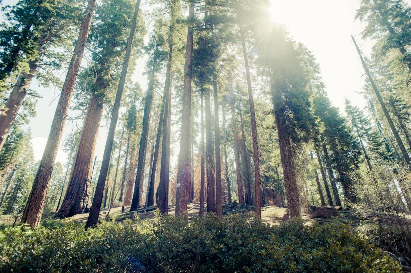 La vida secreta de los árboles