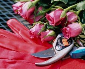 Herramientas para podar rosales