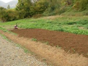 El suelo puede ser arcilloso, ácido o neutro