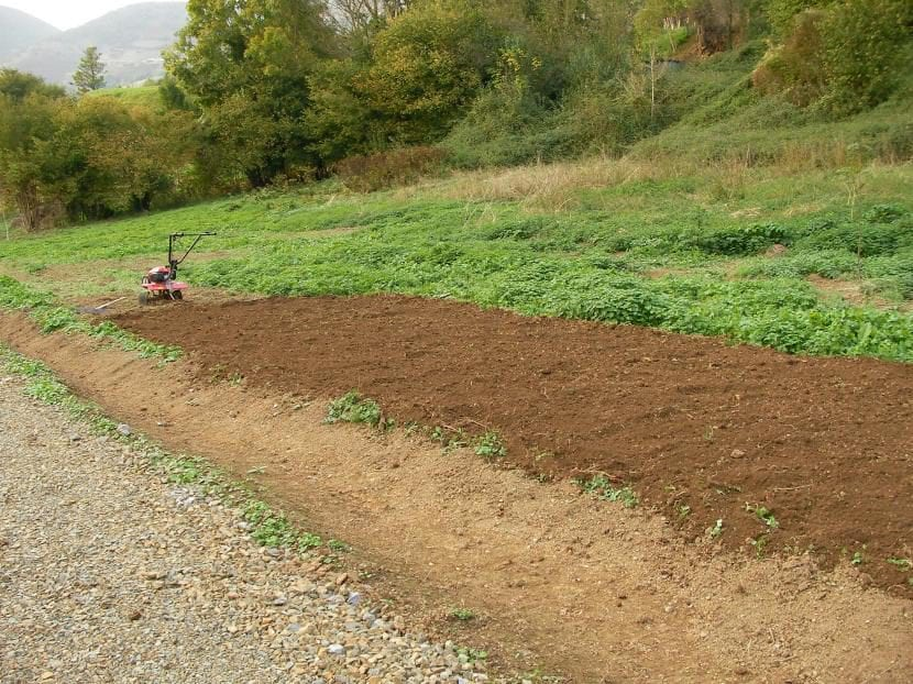 Preparar el terreno antes de sembrar