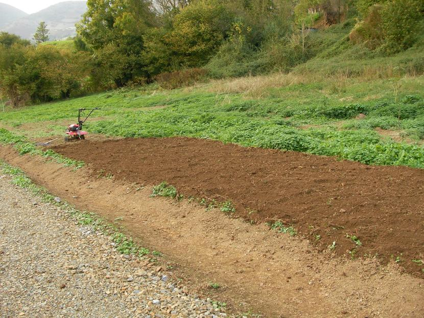 Hay que preparar el terreno antes de plantar la col morada