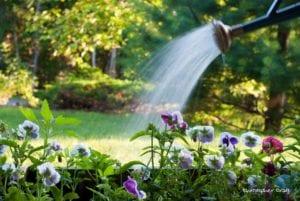 Regar plantas con manguera