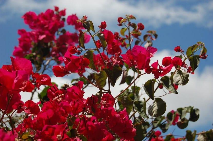 Flores Santa Rita