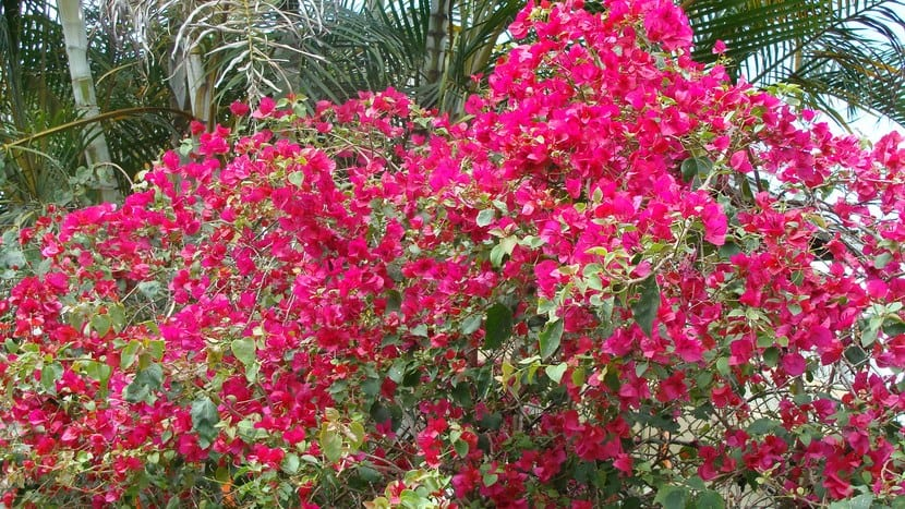 Santa Rita planta