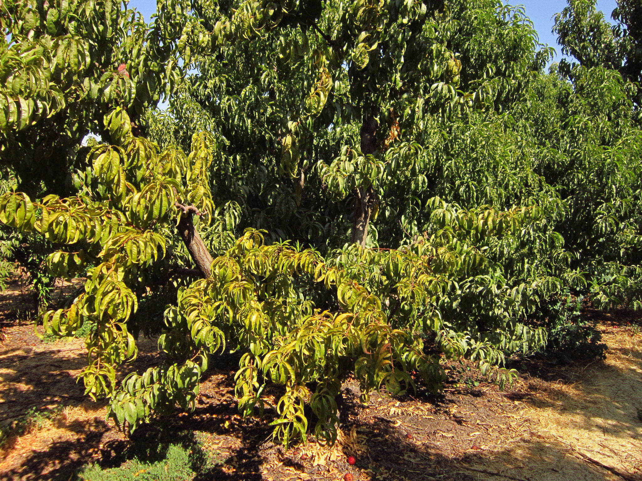 El exceso de abono es un problema para las plantas
