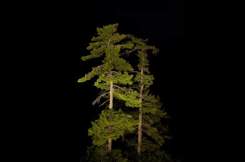 Árboles en la noche