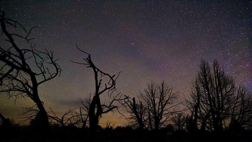 Árboles de noche