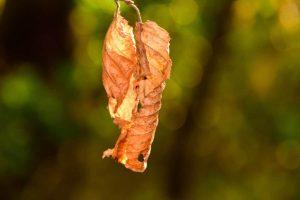 El exceso de abono seca las hojas