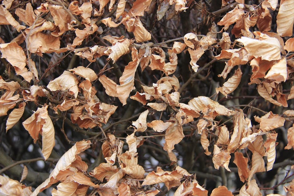 Las hojas que caen al suelo se descomponen y liberan nutrientes
