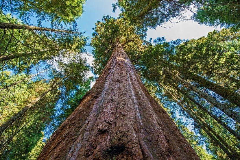 Sequoia Hyperion