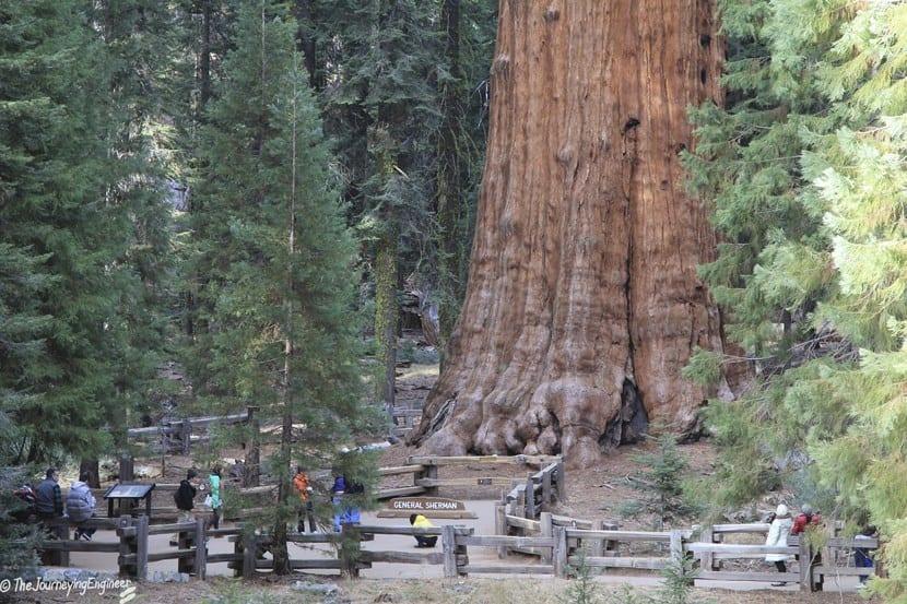 Hyperion, árbol más alto