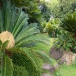 Jardín de Cycas