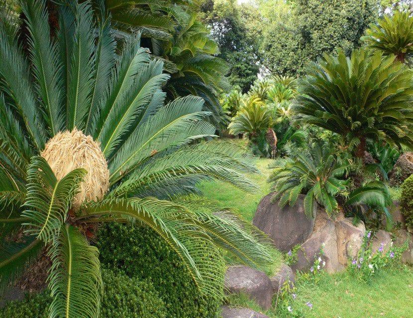 Plantas De Exterior Resistentes - Plantas-exterior-resistentes