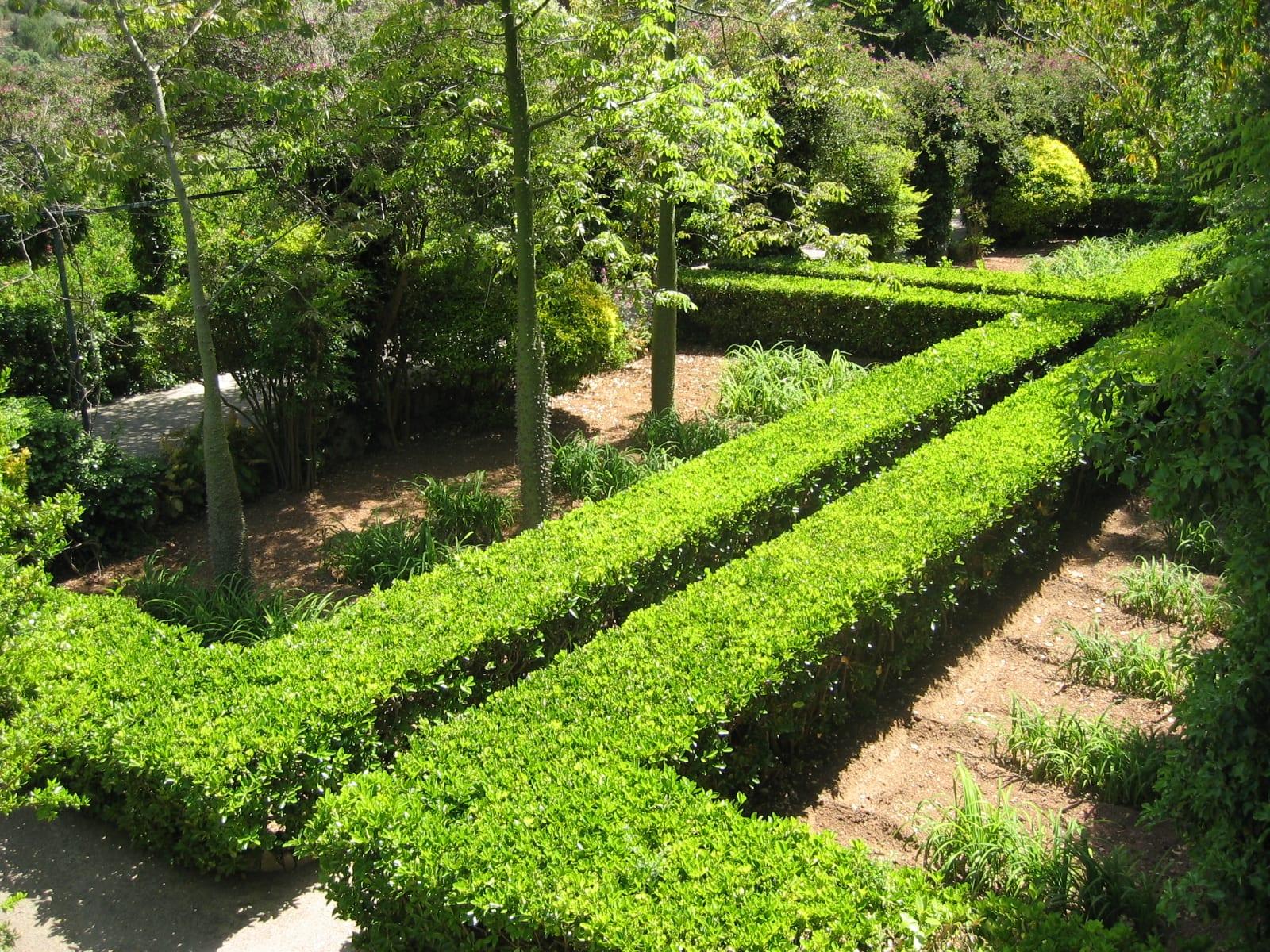 Cu ndo y c mo plantar setos - Cierres de jardin ...