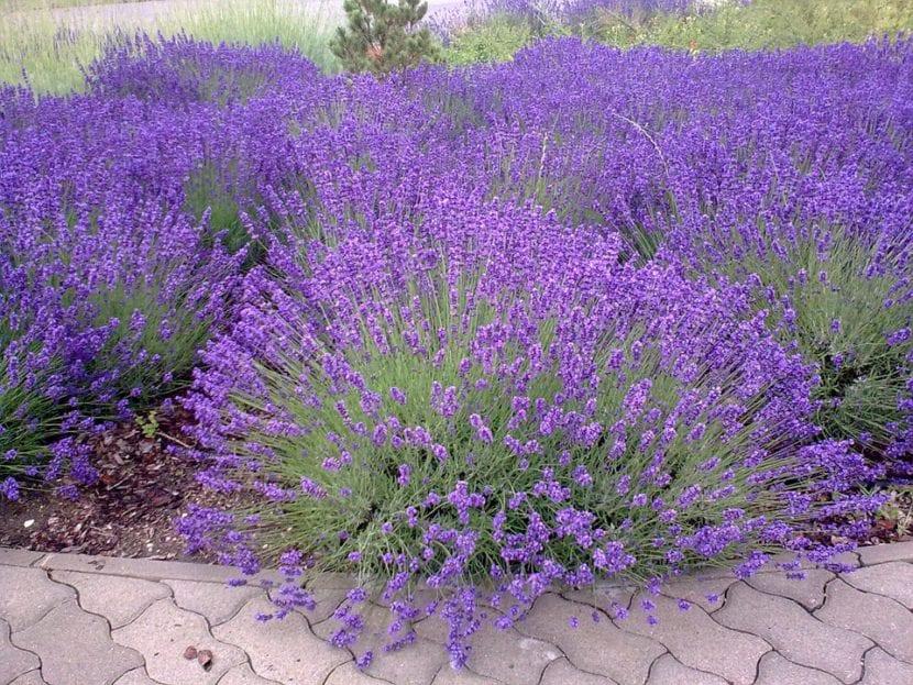 8 plantas de exterior resistentes al fr o y calor