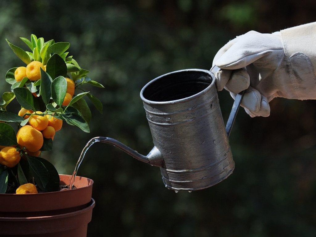 Regadera metálica regando una planta