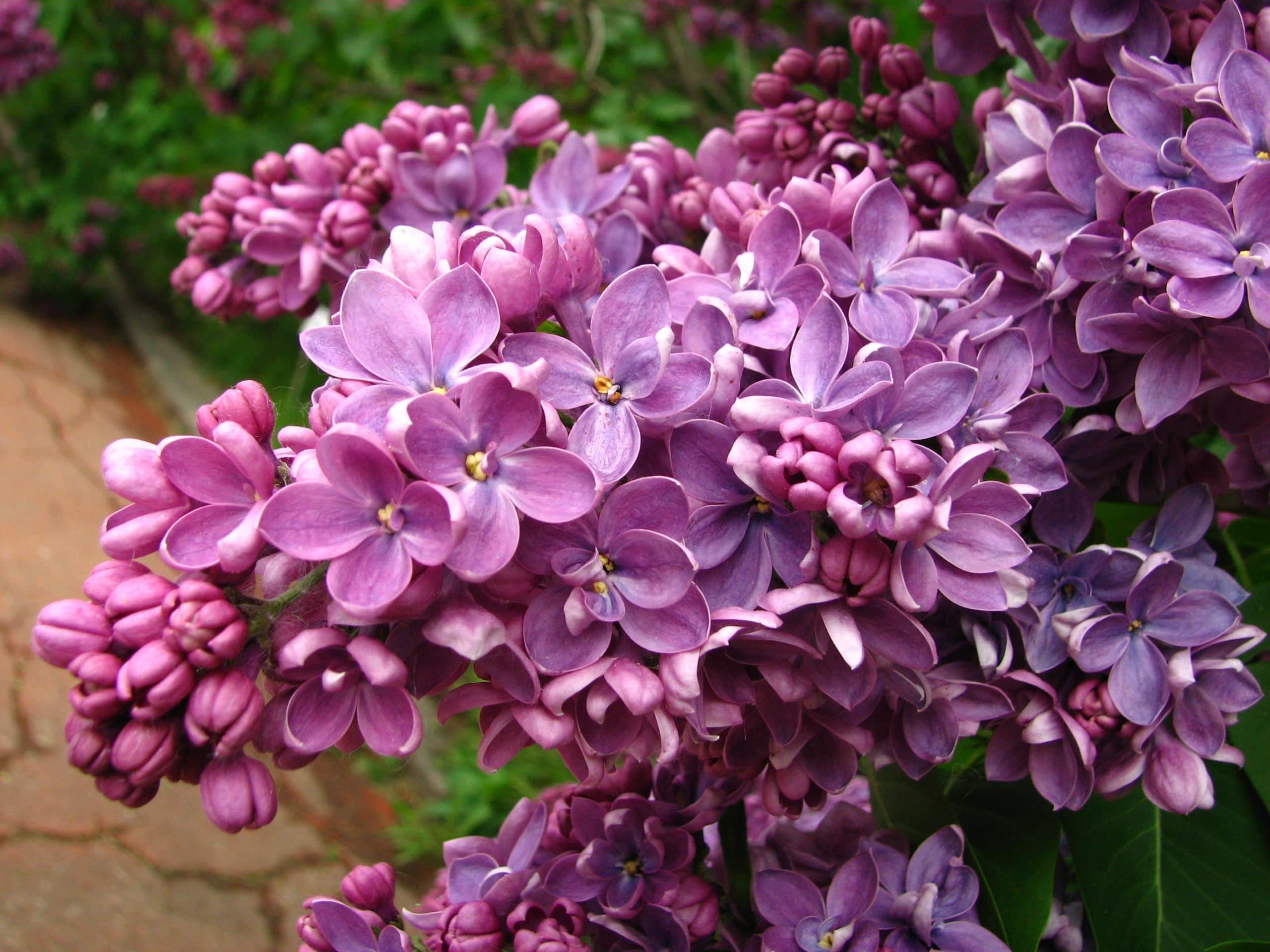 5 rboles con poca ra z para todo tipo de jardines for Plantas de hojas perennes para jardin