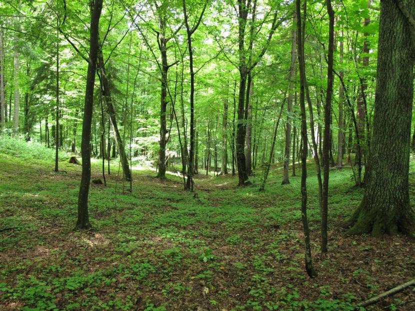 Bosque de árboles caducifolios