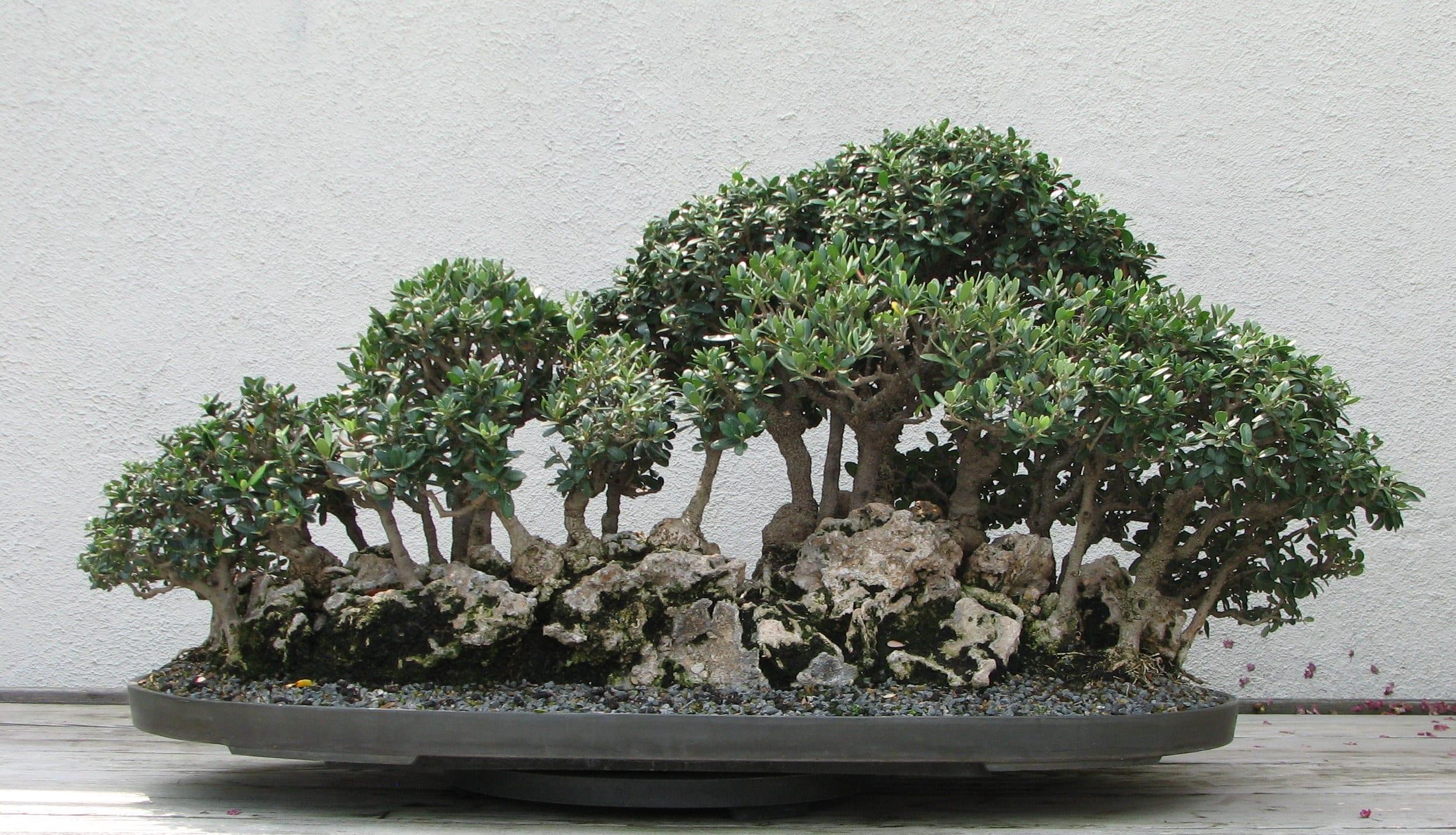 Bosque de olivos