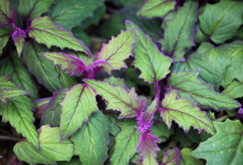 5 plantas colgantes de exterior for Plantas perennes exterior