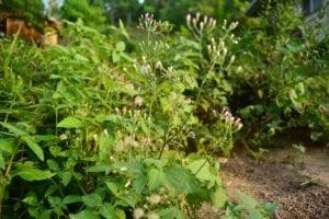 Hierbas en jardín