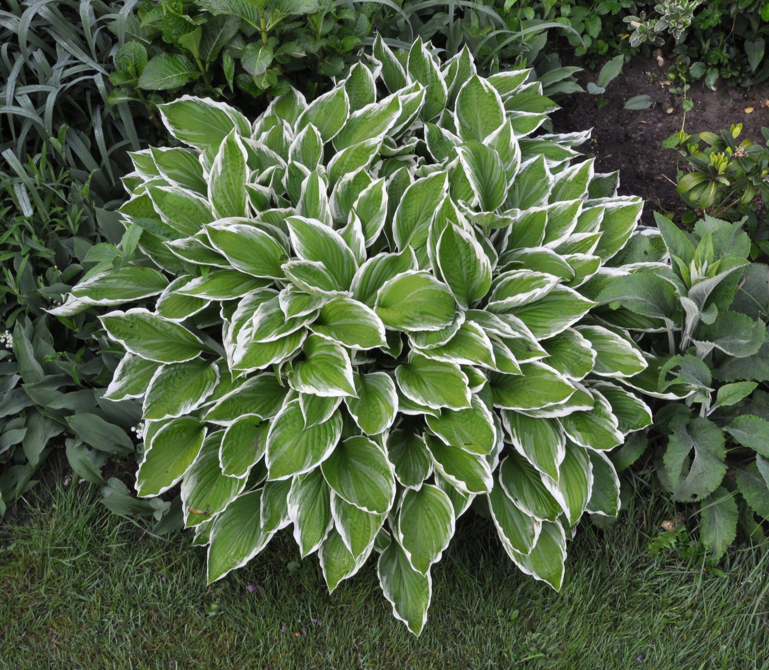plantas de sombra para el jardín