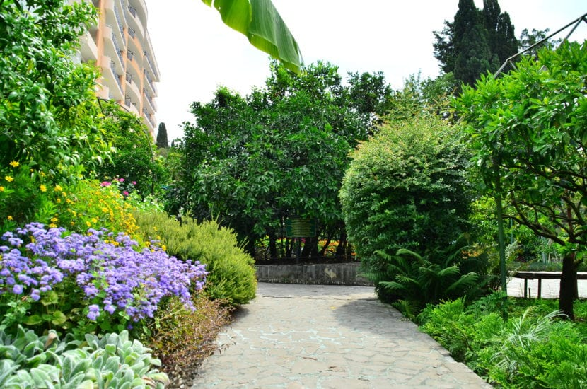 5 rboles con poca ra z para todo tipo de jardines for Arboles frutales de hoja perenne para jardin
