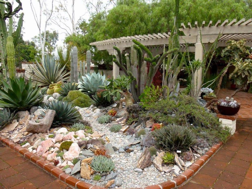 Jardín de cactus y suculentas